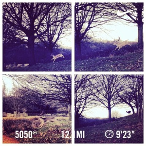 Running with the deer in Richmond Park